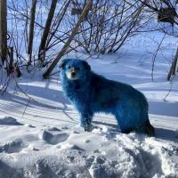 Отходы химпредприятия сделали собак в Дзержинске голубыми