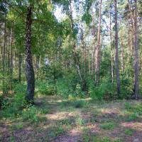 «Нам не нужен этот храм». В Солигорске власти планируют вырубить зелёную зону под строительство церкви