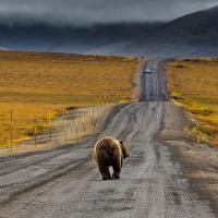 Медведь уходит, арбуз не растет, сиесты нет даже в проекте
