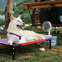 Как помочь животному в такую жару. Несколько полезных советов