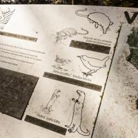 В заповеднике под Воронежем исчезла половина краснокнижных выхухолей