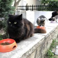 Бродячие коты официально признаны частью экологической системы Херсона