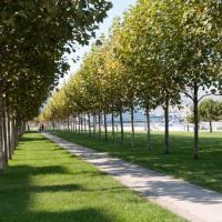 Подпишите петицию об изменении правил озеленения городов
