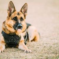 В Польше хотят ввести пенсии для лошадей и собак, работающих в полиции
