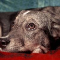 Зоозащитникам «Преданного сердца» придется искать новый дом для десятка оставленных на произвол судьбы животных