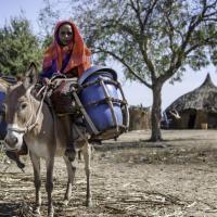 Более 100 тыс человек стали беженцами из-за текущей засухи в Сомали