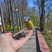 Сейчас вылетит птичка: фотобёрдеры провели чемпионат в Гомеле