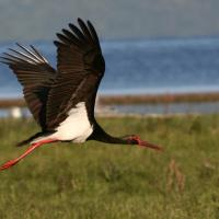 Третий в Беларуси район выберет свою птицу-символ