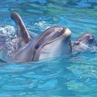 В Одессе во время шоу в дельфинарии на свет появился дельфиненок