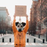 «Ваши машины воняют». Собаки в Астрахани провели серию одиночных пикетов