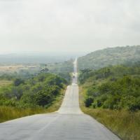 Габон стал первой страной в Африке, которой заплатили за защиту тропических лесов