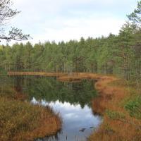 Водно-болотными угодьями международного значения признаны ещё 3 беларусских заказника