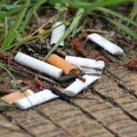 Пластиковый мусор: как окурки убивают природу и вредят растениям