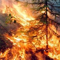 Дым от пожаров в Сибири достиг Поволжья. Почему их не тушат и что будет дальше?