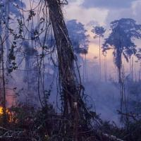 Бразилию застилает дым от горящих лесов Амазонии. Кто виноват в пожарах?