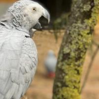 Пять попугаев в британском парке научились оскорблять посетителей. Их пришлось изолировать