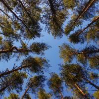 В Беловежской пуще наступила весна. Атмосферные фото из леса
