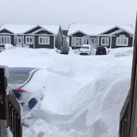 Канадский Ньюфаундленд замело снегом: высота покрова превысила один метр