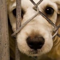 Почему Закон об обращении с животными может узаконить жестокость? Комментарии зоозащитников и психолога