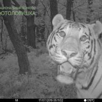Как ИИ распознает заповедных зверей на снимках фотоловушек и зачем это нужно