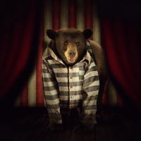 Цирки без животных. 45 стран запретили варварские развлечения