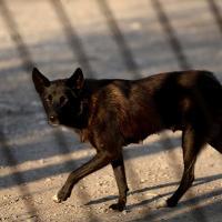 Ловить нельзя убивать. Как в Беларуси решают проблему безнадзорных животных