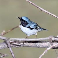 Как изменилась миграция птиц за полвека?