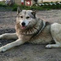 История Борьки. Продолжение: пёс подрался с другой собакой. Сейчас ему спасают зрение и ищут постоянный дом