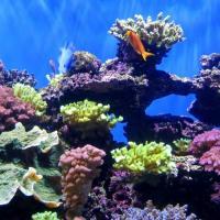 Рост температур убил почти 90% молодых кораллов