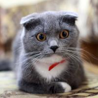 Минчанин не заплатил штраф, и исполнители наложили арест на двух его котов