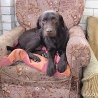 Предприниматель из Гродно держит отель для собак: насколько сложно создавать такого рода бизнес?