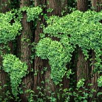 «Зелёная» экономика в Беларуси: что сделано за 12 млн евро?