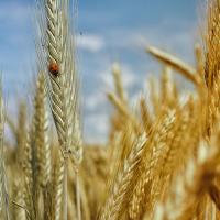 GPS, Интернет и трактор: точное земледелие как спасение человечества