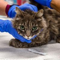 Впервые британский вариант коронавируса обнаружен у домашних животных
