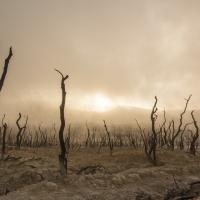Наших правнуков ждёт самый жаркий климат за последние 66 млн лет