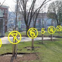 Очередной антирекорд «Зеленостроя»: из десяти деревьев выжило три