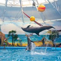 Дельфины в минском дельфинарии не были зарегистрированы в Минприроды