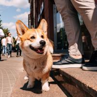 С улитками, котами и собаками теперь можно в МТБанк. Девять отделений стали pet-friendly