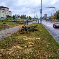 Расширение дорог по-гродненски: срубили сотню деревьев — добавили полосу