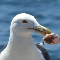 Рыбак из США спас чайку, навещавшую его 15 лет