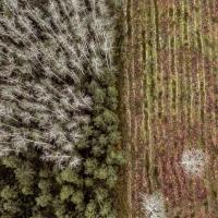 Энергия из древесины. Как в погоне за снижением выбросов люди уничтожают леса