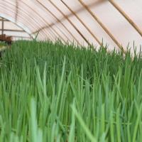 Как заинтересовать беларусских фермеров перейти на органическое земледелие: опыт одного хозяйства на Гродненщине