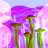 Кожа из грибов и шелк из апельсинов