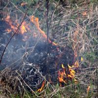 Горим. За сутки – полторы сотни пожаров в экосистемах