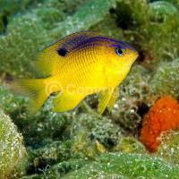 Исследование: рыбы заводят домашних животных, как люди