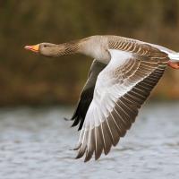Наедине с Россией: «Логично запретить весеннюю охоту на птиц, чтобы дать им возможность восстановиться»