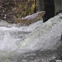 С началом нереста вступает в силу ежегодный запрет на ловлю рыбы