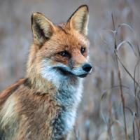 Охотники наступают. Чиновники в России пытаются разрешить браконьерство