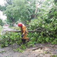 Поваленными ураганом деревьями в Гродно будут топить котельные