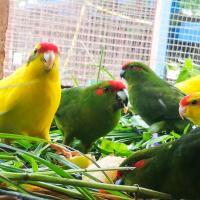 Погибло более 100 попугаев. Что будет с остальными птицами, которых пытались нелегально ввезти в Беларусь?